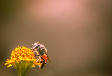 Collecting Honey by SnapShotDataBase