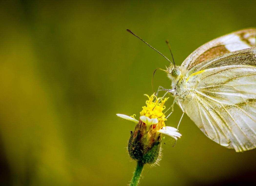 Feedingon Yellow by SnapShotDataBase