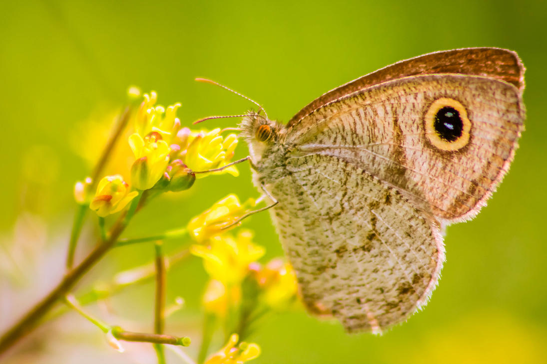 Butterfly by SnapShotDataBase