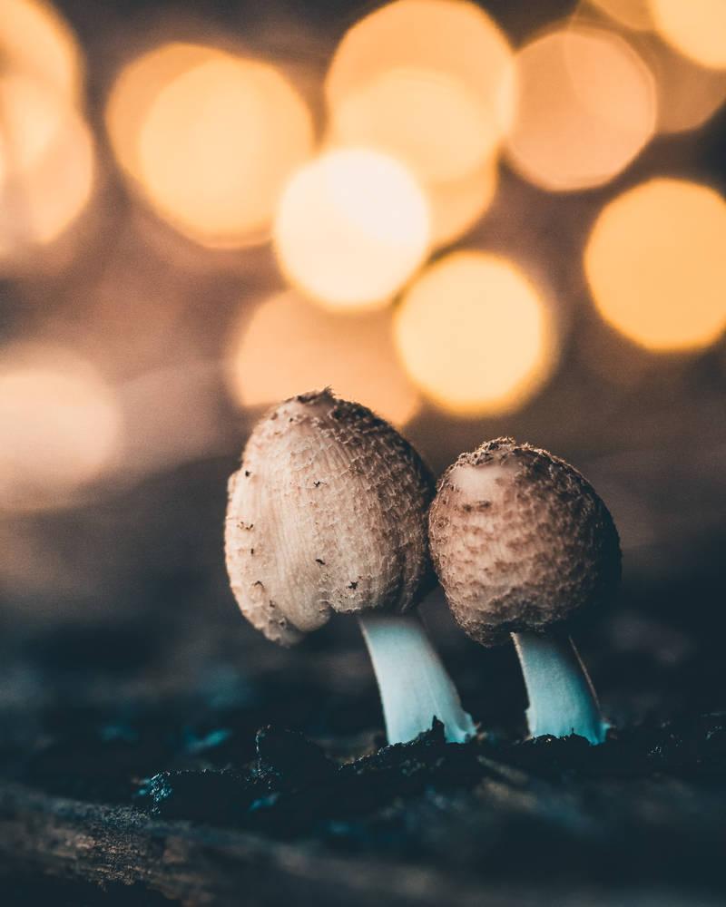Mashrooms by SnapShotDataBase