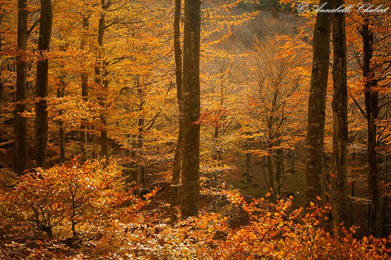 Cosy wood by Annabelle-Chabert