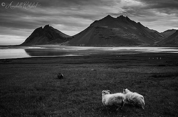 Tha black sheep by Annabelle-Chabert