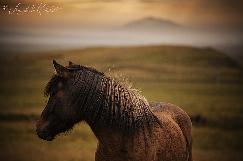 The lonesome by Annabelle-Chabert