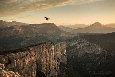 Hovering by Annabelle-Chabert