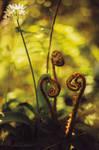 The ferns dialogue