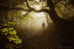 Into eternal woods