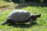 tortoise stock