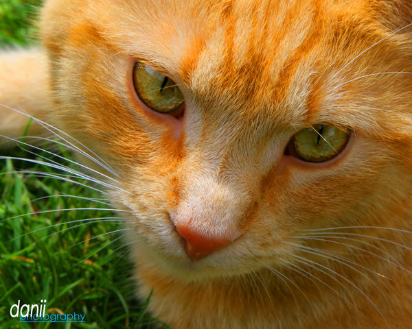 Radke Close-up by Danii-c