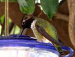 Hummingbird 3 - stock