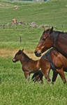 Mares and Foals 3-stock