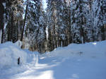 Snowy Road 3