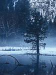 Winter Pond -stock