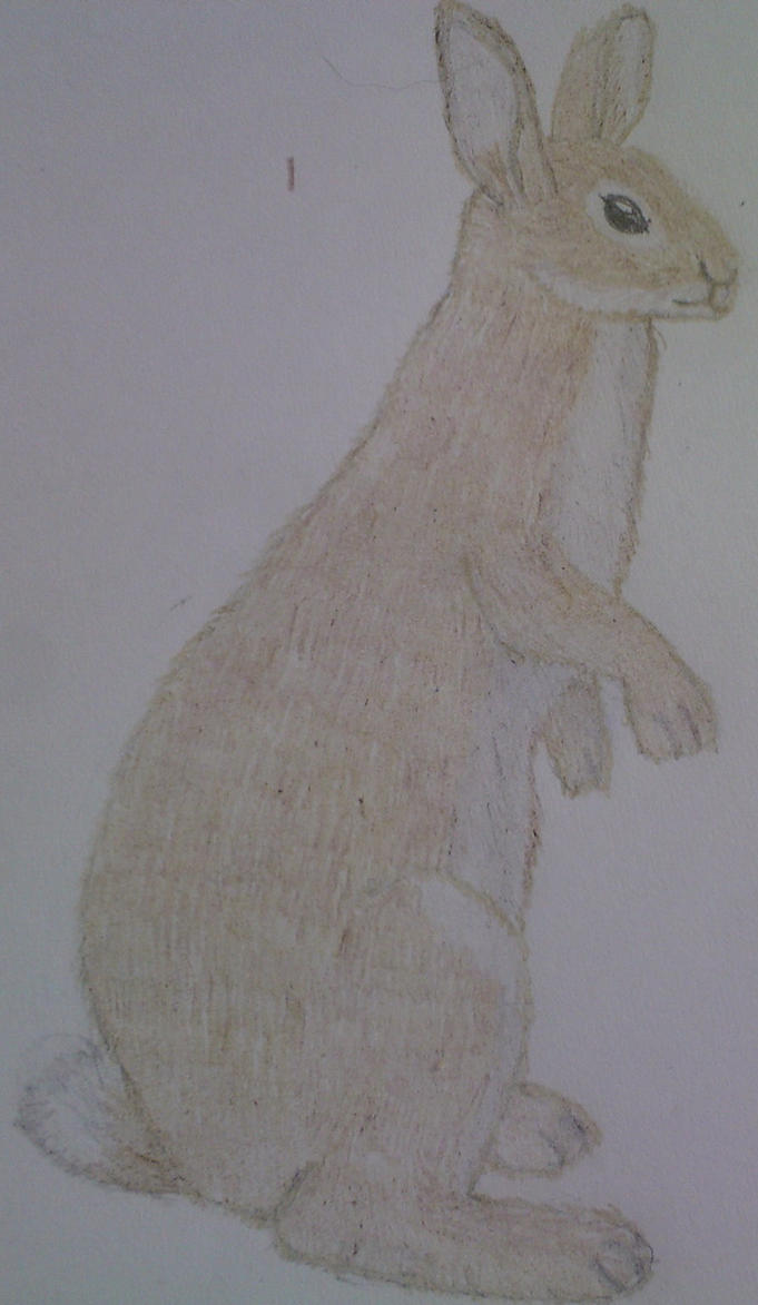 Rabbit Colored Pencil Drawing by SamuelEarl666