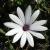 flower ID by smithernz