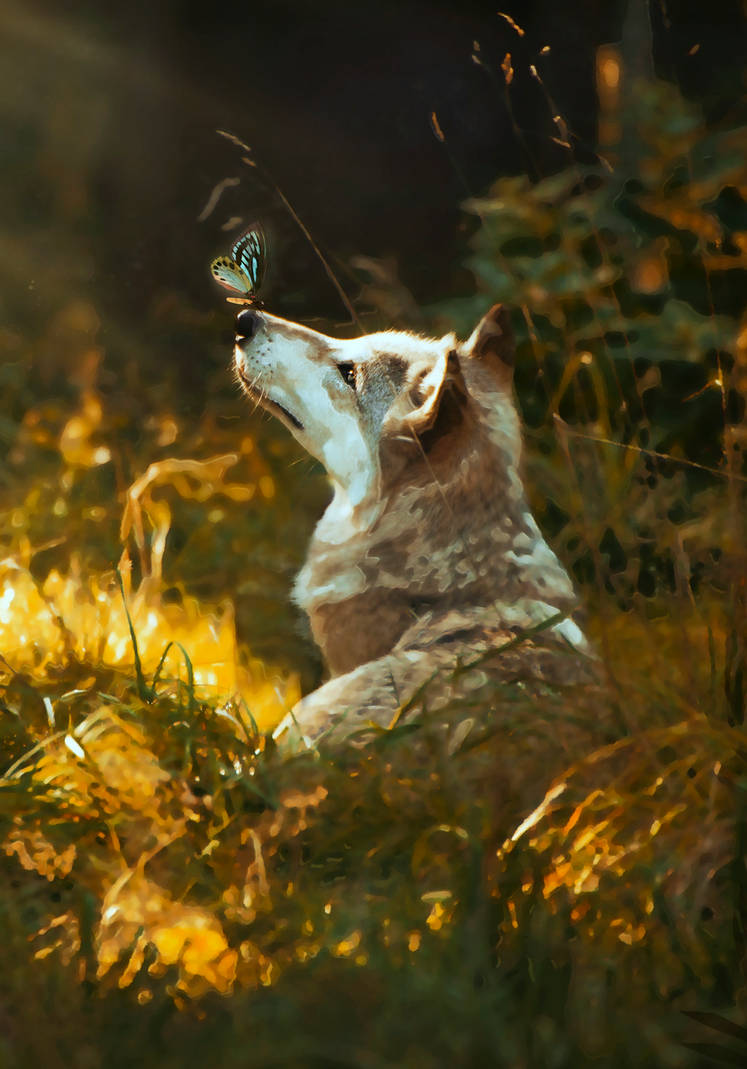 Wolf with Butterfly