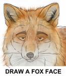 Draw Fox Face
