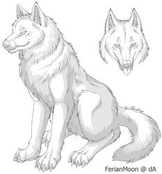 Free Wolf Ref Sheet by FerianMoon