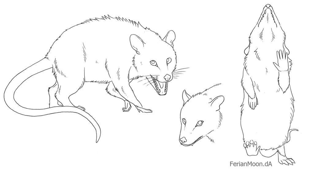 Free Opossum Lineart by FerianMoon