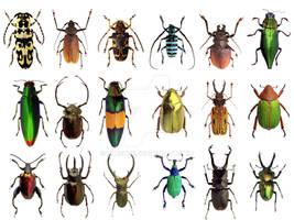 Beetles Poster Design