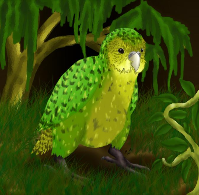 Kakapo Wallpaper -Kakapo- by Ms-Silver ...