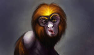 Self Portrait as Tamarin