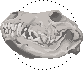 [Bild: wolf_skull_icon__free_to_use__by_akumiirako-dbl6hi8.png]