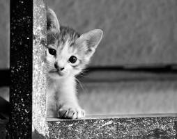 Who's There?? by Al-Obaidy
