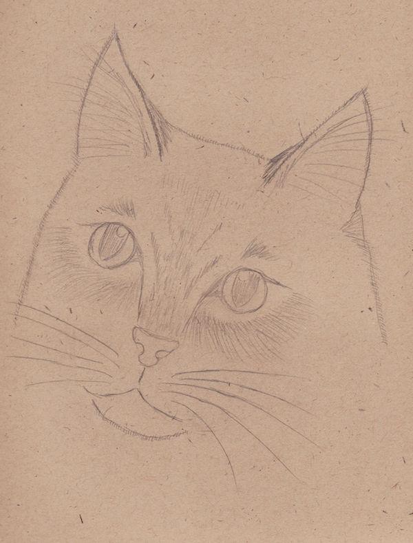 2015 - 001: Cat sketch