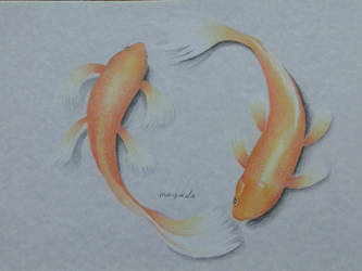 Koi Fish With Color Pencils by mimi-memo
