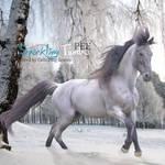 Sparkling Tundra - HEE