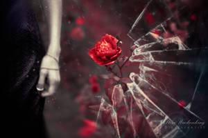 Death Blooms by SteveWackenKing