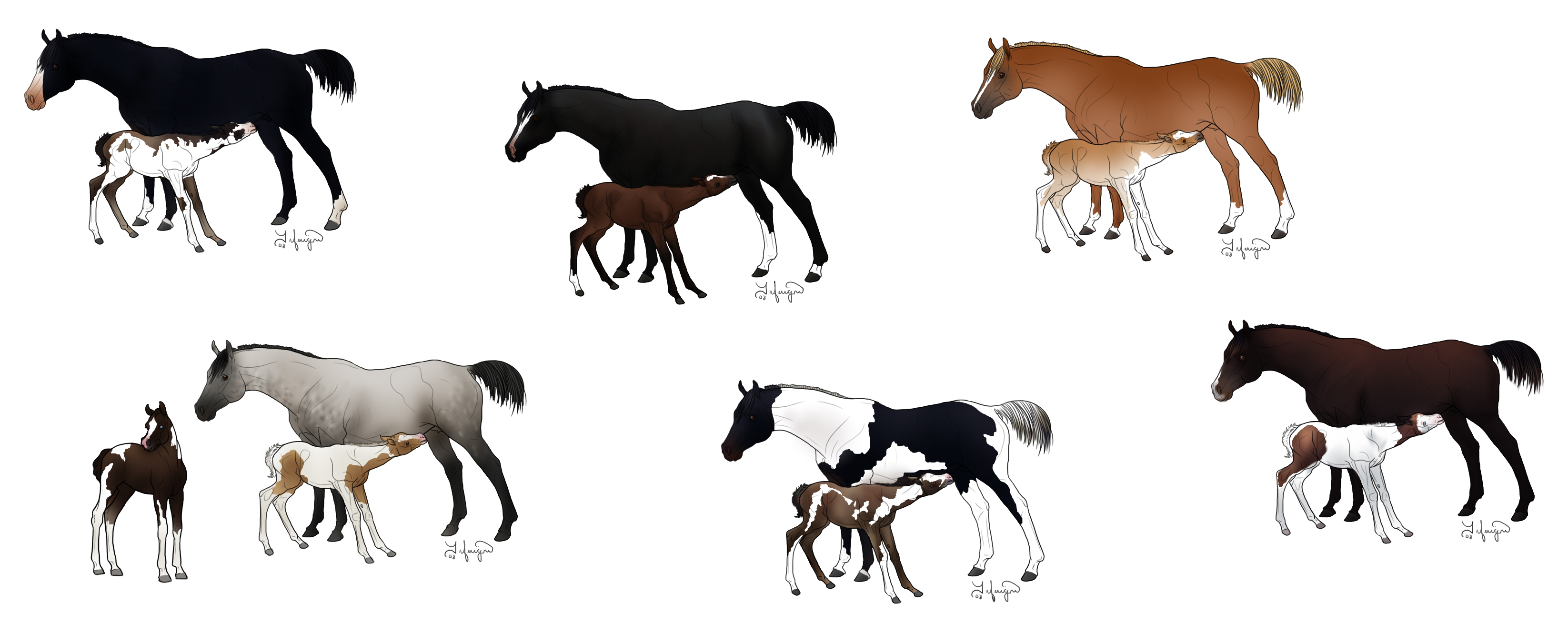 Adoptable Mares And Fo...