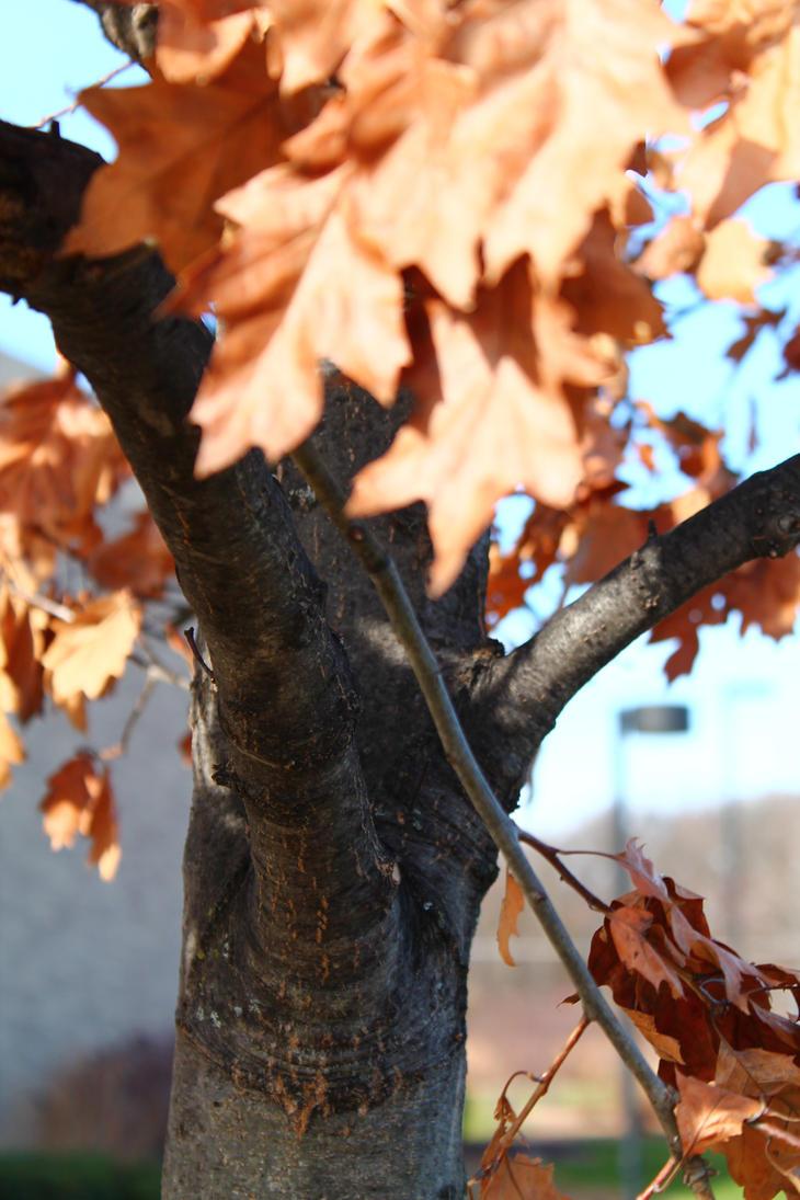 Fall foilage by Breath0fAir