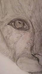 cattigerpuma sketch )))