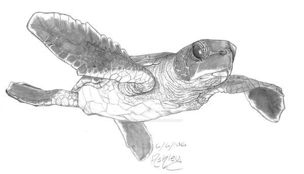 Baby Sea Turtle By Orangebluecream On Deviantart