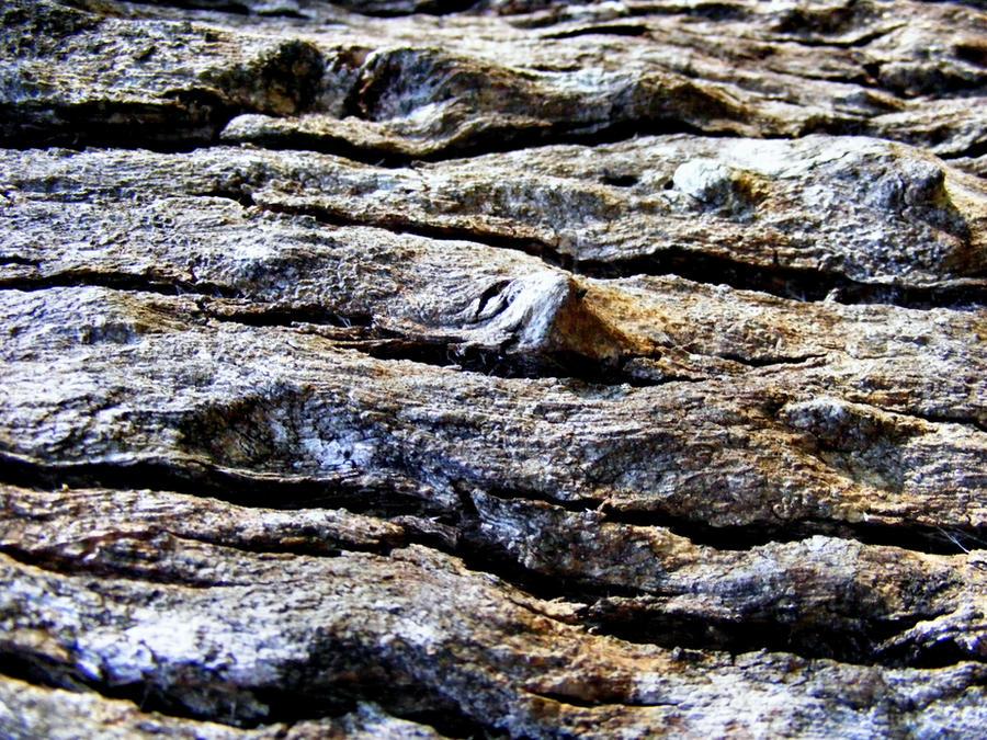 Bark Textures by Dontheunsane