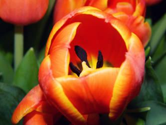 Spring Love by Frostyfur-Studios