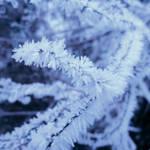 Rime Crystals by Somnambula-Kosh