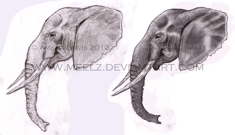 Tradigital Elephant Head Sketch By Meelz On DeviantArt