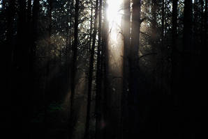 Sunlight in the forest 01