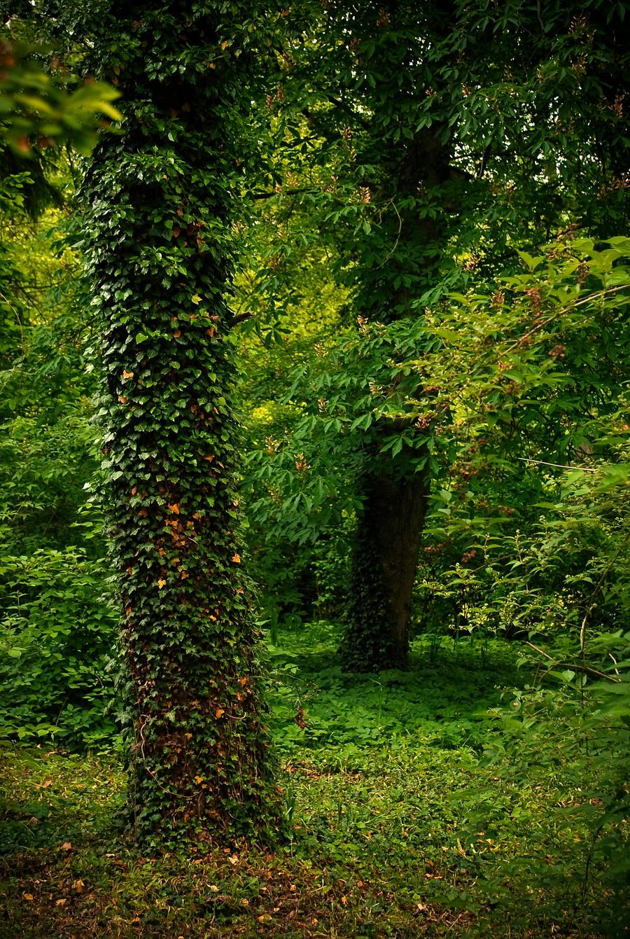 nature background wallpaper - photo #5