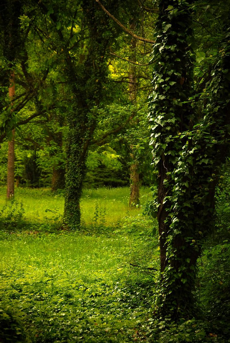 Nature background 14 by elanordhstock on DeviantArt