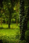 Nature background 14