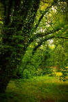 Nature background 16