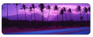 F2u purple palmtrees