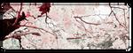 F2u Cherry Blossom by JERE-AQUATIC