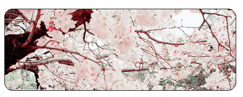 F2u Cherry Blossom by Salt-prince-vince