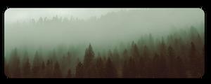 F2u Foggy Forest