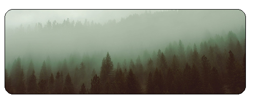 F2u Foggy Forest by Evan-escence
