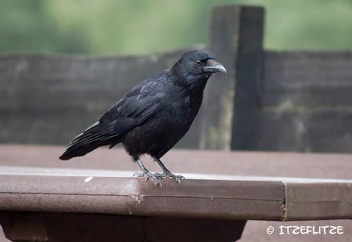 One of my favorite birds :-)